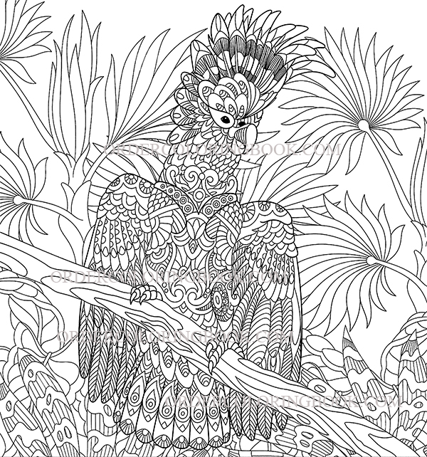Cockatoo Parrot Coloring Pages